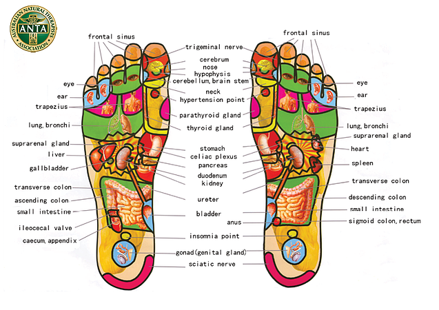 Acupuncture Points - Feet
